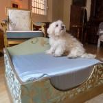 Arteggiando-che vita da  cani 1